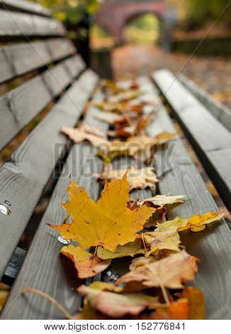 Yellow leafs on the wooden bench - autumn is here