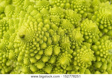 horizontal macro image of a green romanesco cauliflower which fills the whole frame.