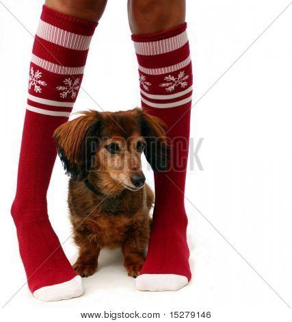 Piernas en medias de Navidad con un cachorro, aislado.