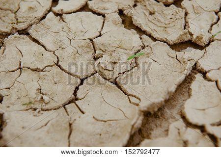 Cracked Ground,dry Land.