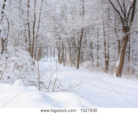 Bike Trail After Snowstorm
