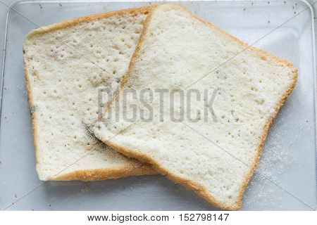 Mold bread Experiment in science laboratory samples