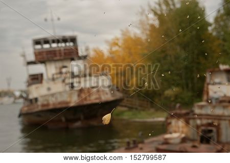 Rusty abandoned ships in the dock. Autumn trees spider webs.