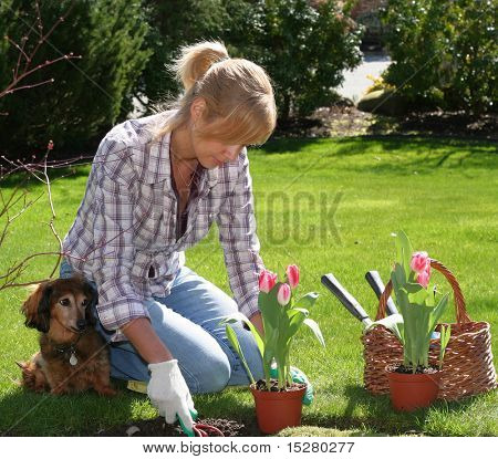 Pretty blond woman planting tulips in the garden.