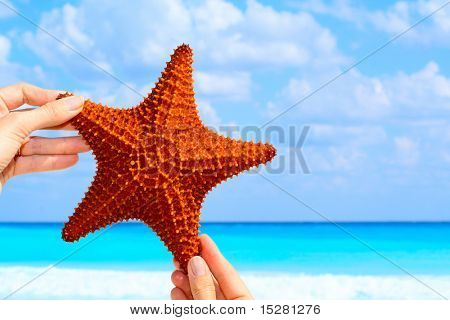 Hand held starfish in front of a caribbean blue ocean.