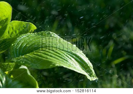 Summer Rain. Moisture Condensed From The Atmosphere That Falls Visibly In Separate Drops.