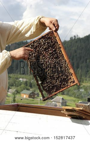 Beekeeper In Action. Bee Honeycomb Mountains In The Background