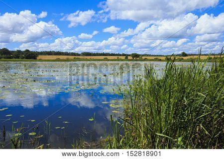 The lake with the water lilies in the northern region of Lithuania.