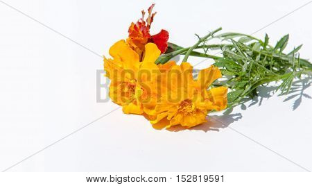 Marigolds Flowers. A Plant Of The Daisy Family, Typically With Yellow, Orange, Or Copper-brown Flowe