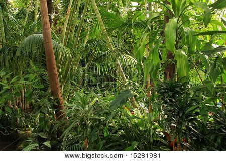 Tropical rainforest jungle