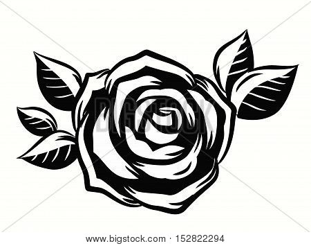 vector contour beautiful roses flower on white