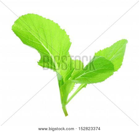 Leaf of choy sum a kind of chinese vegetable isolated on white