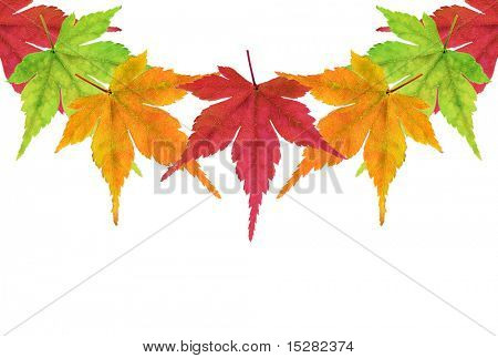 Thanksgiving border of autumn maple leaves. The outside edges match up so you duplicate and create a border as long as needed.