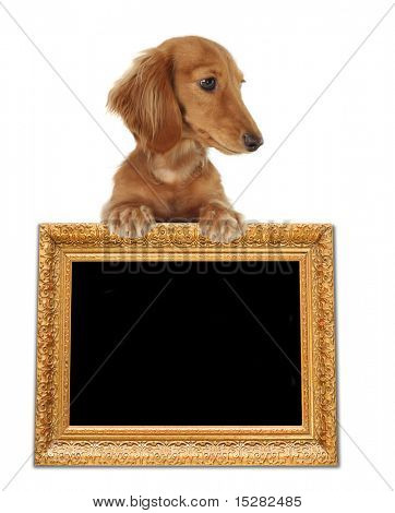 Cute dachshund over an antique frame, add your own text.