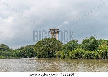 Swamp Forest Ratargul