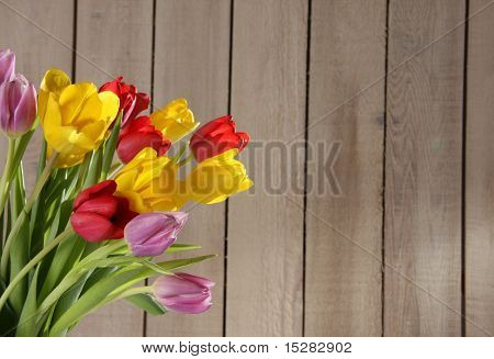 Tulips against a fence.