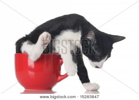 Funny kitten in a red tea cup.