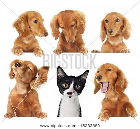 Lustige Kätzchen von Hunden umgeben.