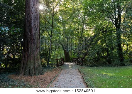 View Park in Sarvar, Hungary. Green foliage of trees and the sun's rays are making their way through it
