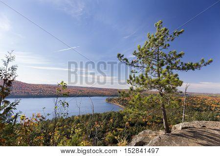 White Pine Tree Overlooking An Autumn Lake - Ontario, Canada