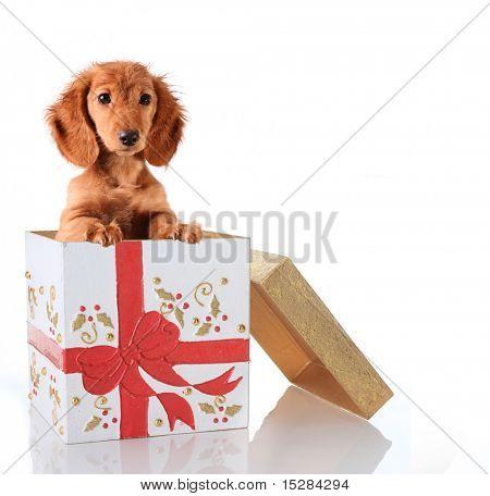 Filhote de cachorro de Natal em uma caixa de presente.