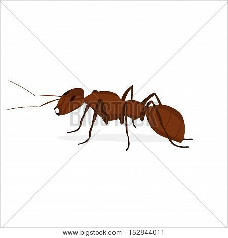 brown ant with antennae on a white background