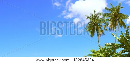 Sunshine had Shining in the blue sky have cloud and coconut tree at Sukhothai province in Thailand Asia.