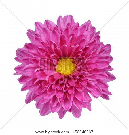 Pink and Purple Flower Isolated on White
