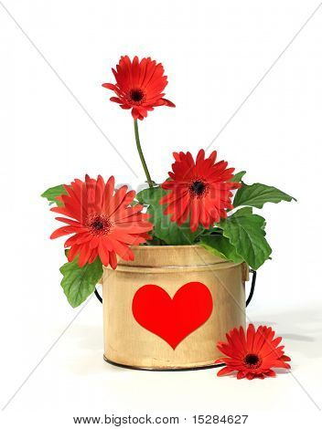 Pretty potted daisy with a red heart for Valentine's day.