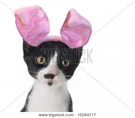 Funny black and white kitten wearing pink Easter bunny ears.