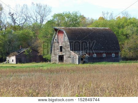 A abandoned Barn with an attached milk house on a n abandoned farmstead.
