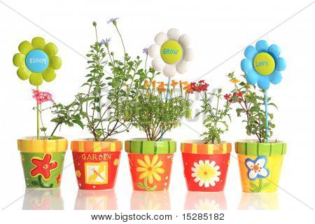 Pretty flowers in colorful pots.