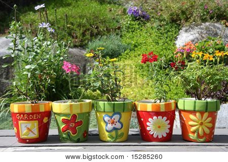 Colorful pots with pretty flowers, outside in the garden.