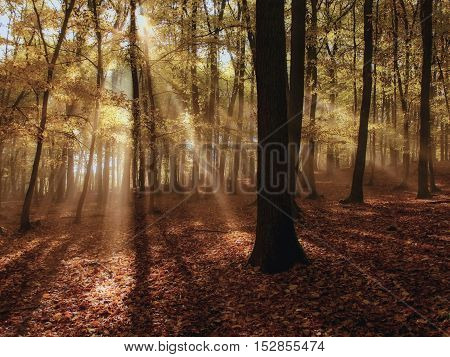 The sun's rays shining through the trees in the forest on morning fog.