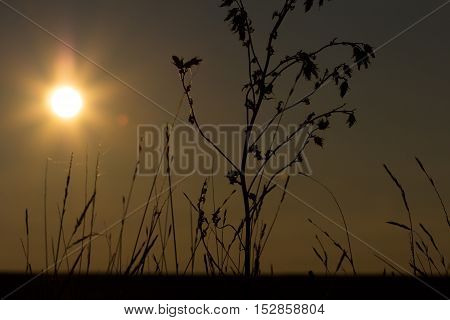 Plants silhouette against sunset. Village life. Photography of nature.