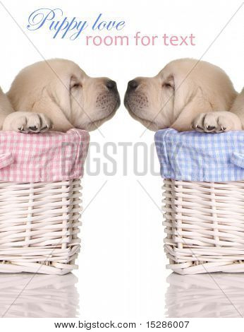 Puppy love, sleeping puppies in pink and blue baskets.