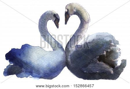 watercolor sketch of a swan on white background