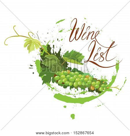 Bunch of green grapes with leaves and wine stain isolated on white background. Handdrawn text Wine list. Element for restaurant bar cafe menu or label.