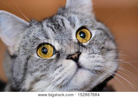 The image of a cat close up