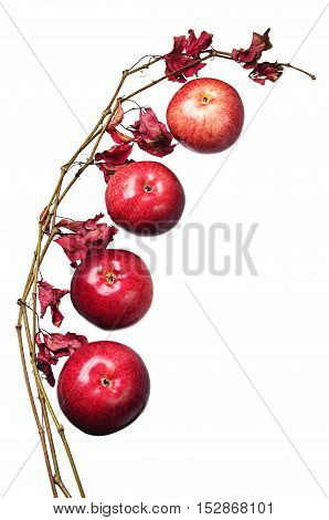 Apples and a branch with autumn leaves isolated on white