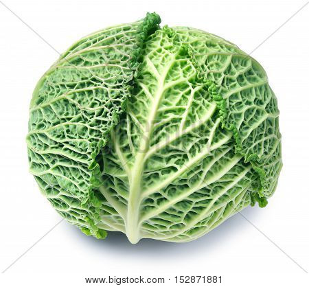 Savoy cabbage on a white background closeup
