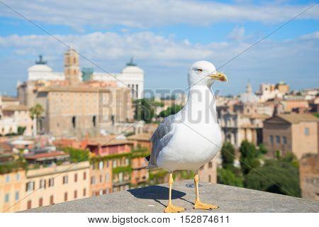 skyline of Rome and seagull bird, Rome Italy