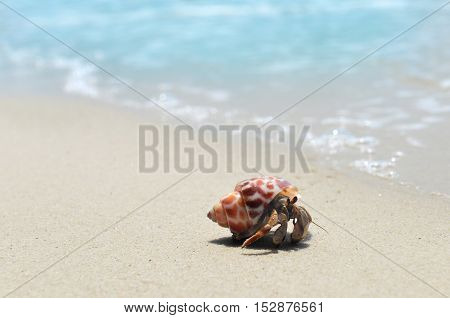 Life Of Hermit Crab On The Beach