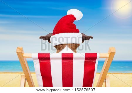 Dog Beach Chair On Christmas Holidays