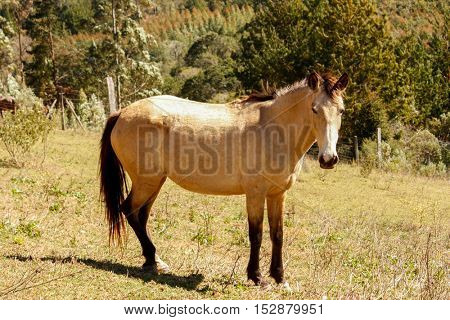 Brown horse stands in a meadow