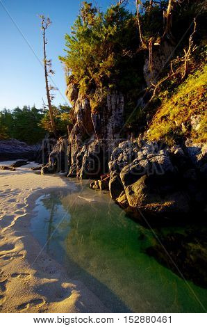 Trees rocks and a limpid tide pool are illuminated by the warm early morning light on the outer islands of the Great Bear Rainforest in BC.