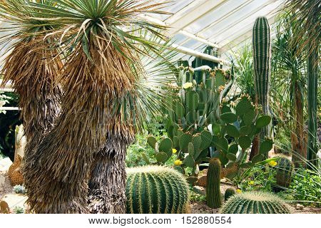 Cacti and palm trees in the botanical garden.