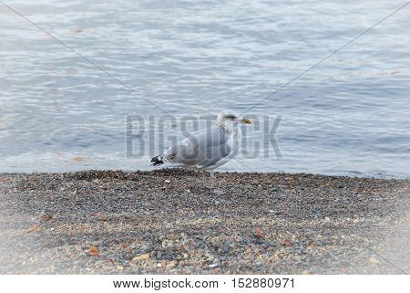 Lonely seagull on beach in fall, nature