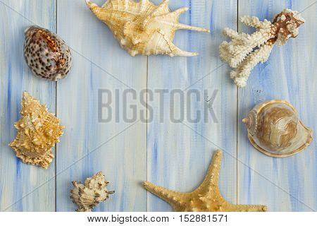 Different Seashells On A Blue Wooden Background