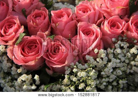 Pink roses and baby breath (gypsophila) in a wedding arrangement